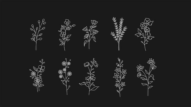 Sammlung farbloser botanischer illustrationen