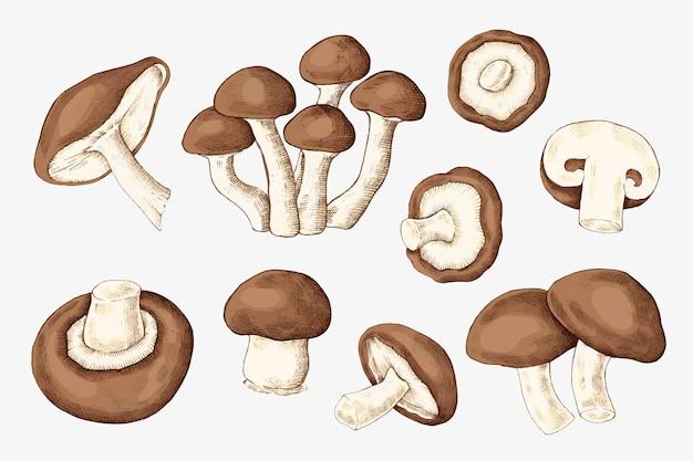 Sammlung frischer bio-pilze