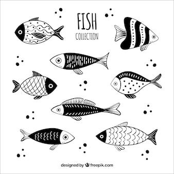 Sammlung gezeichnete art der fische in der hand
