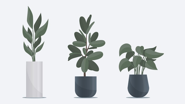 Sammlung großer flacher pflanzen in vase, die auf dem boden steht büro- und heimdekorationselemente