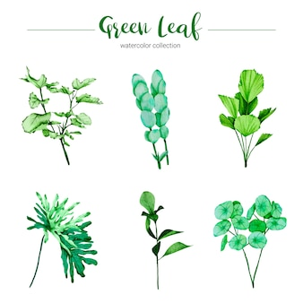 Sammlung grünes blatt der aquarellillustration