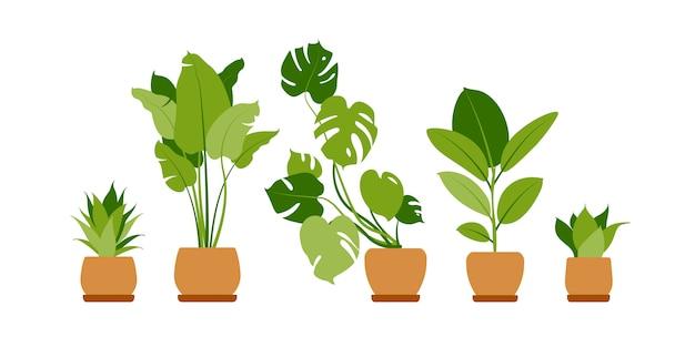 Sammlung heimischer pflanzen. topfpflanzen isoliert auf weiß. setze grüne tropische pflanzen. trendy wohnkultur mit zimmerpflanzen, pflanzgefäßen, kakteen, tropischen blättern.