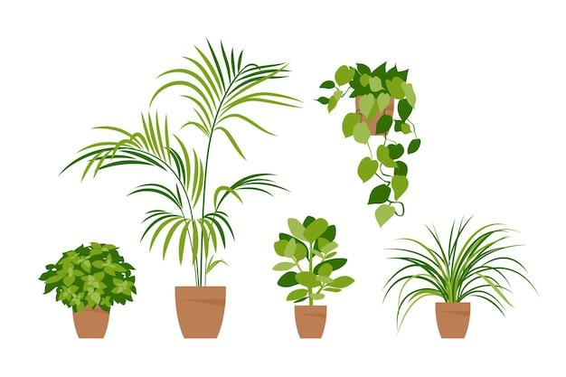 Sammlung heimischer pflanzen. topfpflanzen isoliert auf weiß. vektorsatzgrünpflanzen. trendy wohnkultur mit zimmerpflanzen, pflanzgefäßen, tropischen blättern. eben.