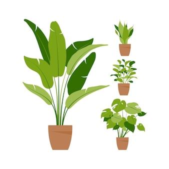 Sammlung heimpflanzen. topfpflanzen isoliert auf weiss. vektor-set grüne tropische pflanzen. trendige wohnkultur mit zimmerpflanzen, pflanzgefäßen, tropischen blättern. eben.