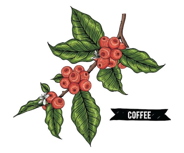 Sammlung kaffee mit beerenblumen und -niederlassung