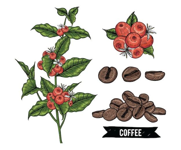 Sammlung kaffee mit bohnenbeerenblumen