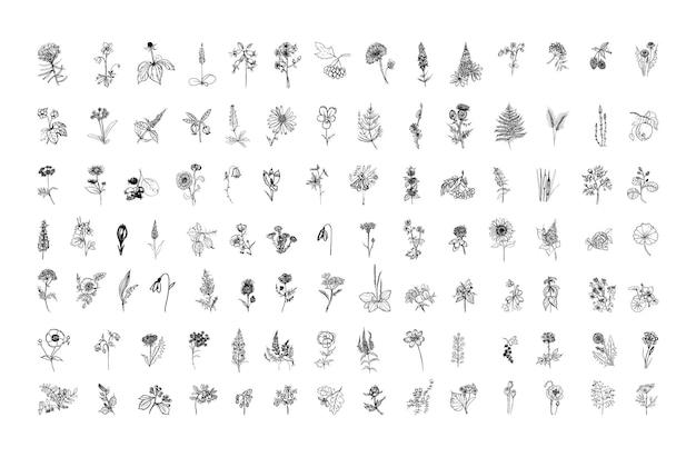 Sammlung monochromer illustrationen von pflanzen im skizzenstil