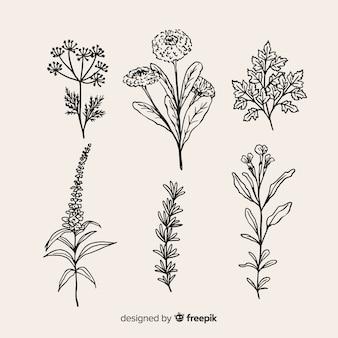 Sammlung realistische hand gezeichnete botanische blumen