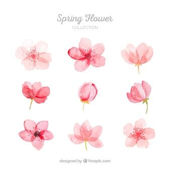 Sammlung rosa frühlingsblumen