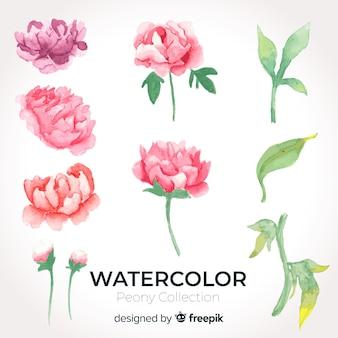 Sammlung schöne aquarellpfingstrosenblumen