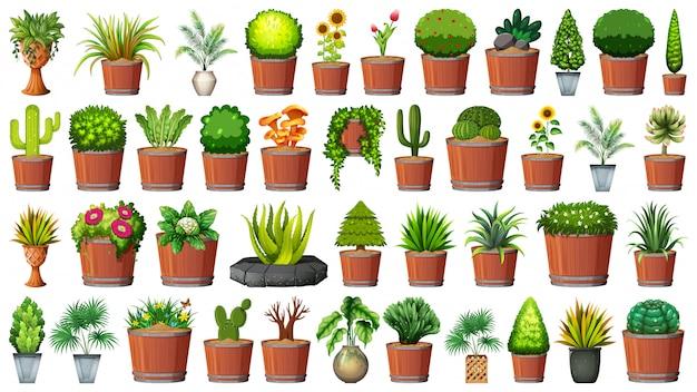 Sammlung topfpflanzen auf weiß