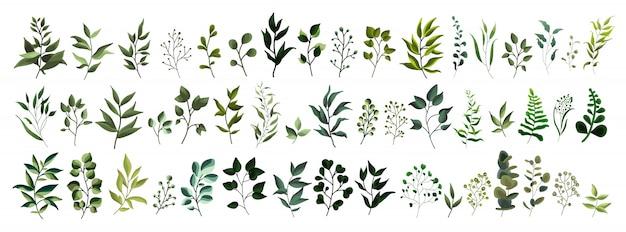 Sammlung tropische blattfrühlingsflora der grünblattbetriebswaldkräuter in der aquarellart.