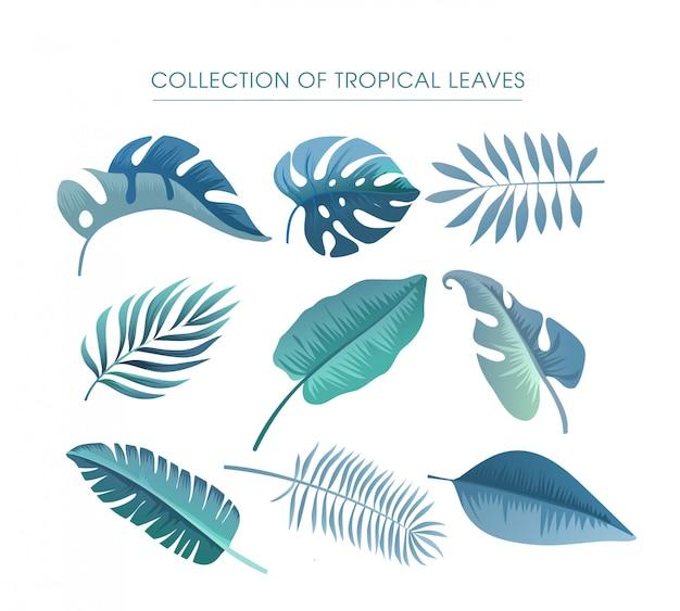 Sammlung tropischer blätter