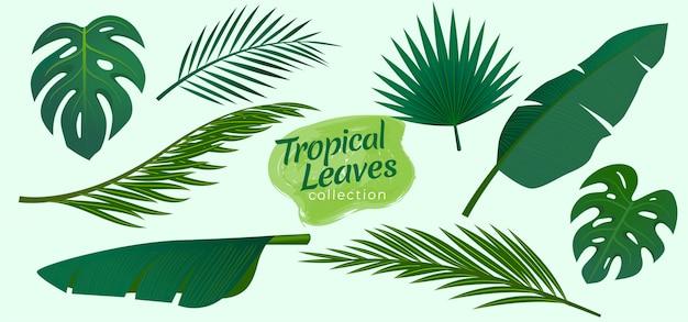 Sammlung tropischer blätterillustration