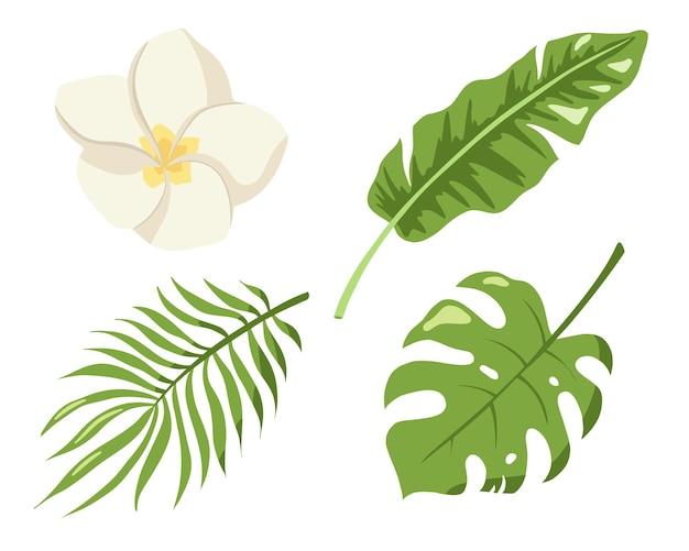 Sammlung tropischer blumen und blätter. flacher stil. monstera, palmen- und bananendschungelblätter, plumeriablüte, naturdekorationsset für logo, kosmetik, spa, schönheitspflegeprodukte. premium-vektor