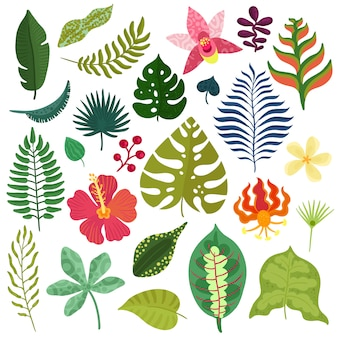 Sammlung tropischer pflanzen