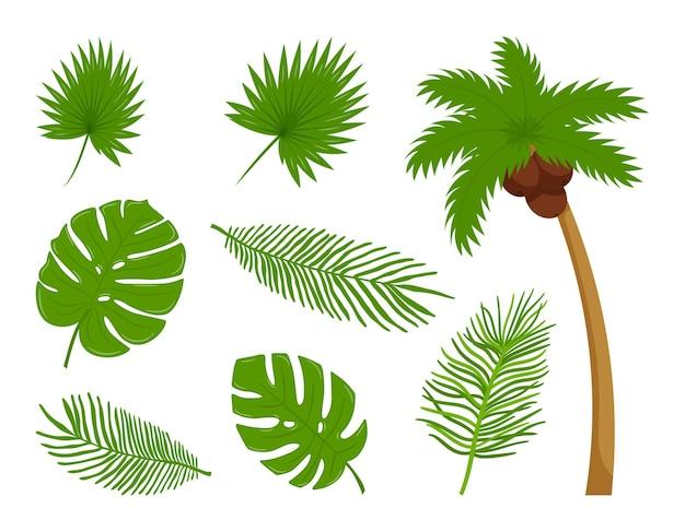 Sammlung verschiedener botanischer, tropischer blätter, kokospalme. gestaltungselemente des sommers, tropen