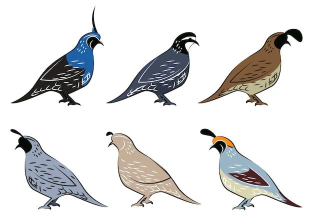 Sammlung verschiedener vögel illustration