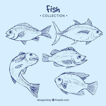 Sammlung von blauen fisch