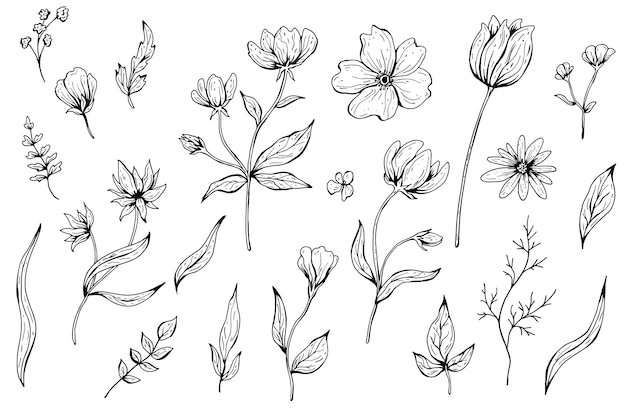 Sammlung von blumen, blättern, pflanzen. hand gezeichnete illustration. monochrome schwarzweiss-tuschenskizze. strichzeichnungen. isoliert