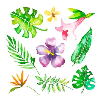 Sammlung von blumen und tropischen blättern