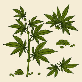 Sammlung von botanischen cannabisblättern und -samen