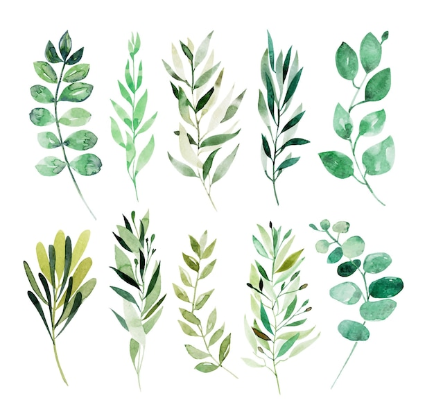 Sammlung von botanischen elementen der aquarellgrünzweige isoliert