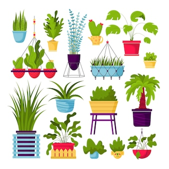 Sammlung von dekorativen zimmerpflanzen lokalisiert auf weiß Premium Vektoren