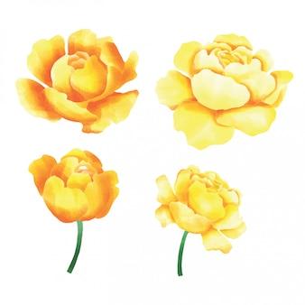 Sammlung von elementen der rose stil aquarell-stil