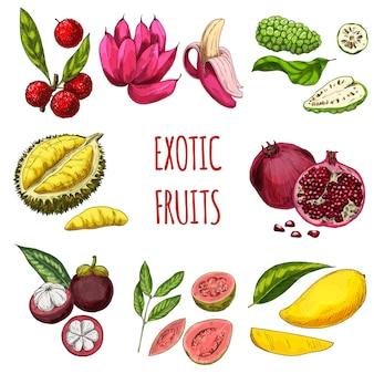 Sammlung von exotischen früchten