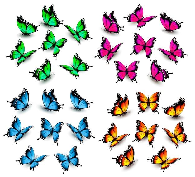 Sammlung von farbschmetterlingen. vektor
