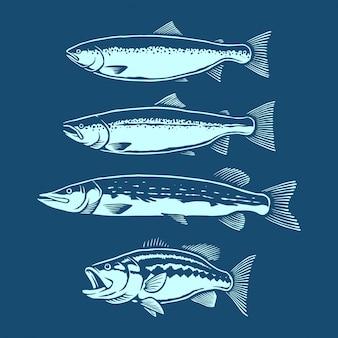 Sammlung von fischen