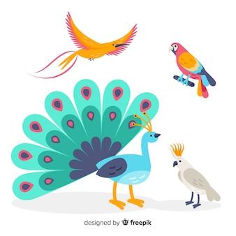 Sammlung von flachen exotischen vögeln