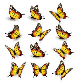 Sammlung von gelben schmetterlingen, die in verschiedene richtungen fliegen. vektor.
