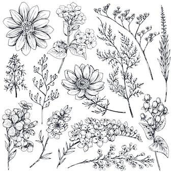 Sammlung von handgezeichneten frühlingsblumen und -pflanzen. einfarbig