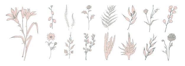 Sammlung von handgezeichneten rosa blumen, farnen und sukkulenten lokalisiert auf weißem hintergrund. bündel botanischer zeichnungen eleganter wildpflanzen, blumendekorationen.