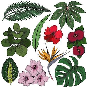 Sammlung von handgezeichneten tropischen blumen, palmblättern, dschungelpflanzen.