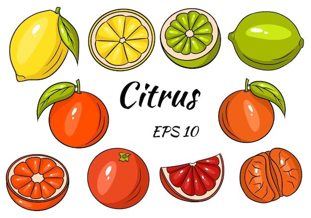Sammlung von hellen zitrusfrüchten