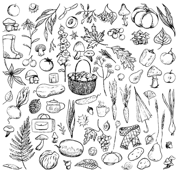 Sammlung von herbstthema-doodles. einfache konturzeichnungen von pilzen, pflanzen, kleidung, blättern, ernte. handgezeichnete vektorgrafiken. umreißen sie vintage-elemente, isoliert auf weiss für design.
