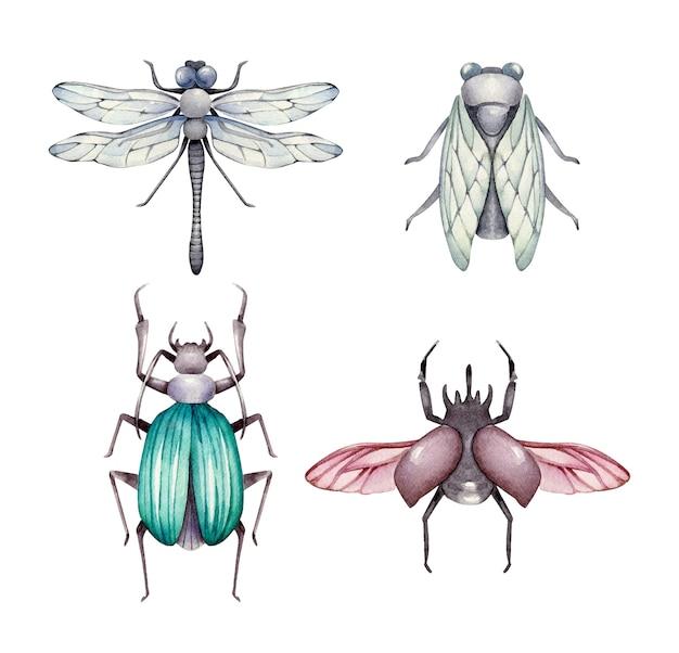 Sammlung von käferillustrationen