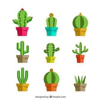 Sammlung von kaktus in flachem design