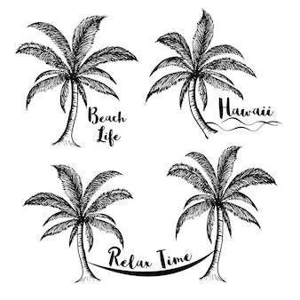 Sammlung von kokosnussbäumen