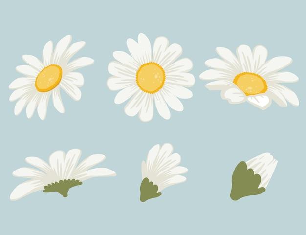 Sammlung von niedlichen gänseblümchen im flachen vektorstil.