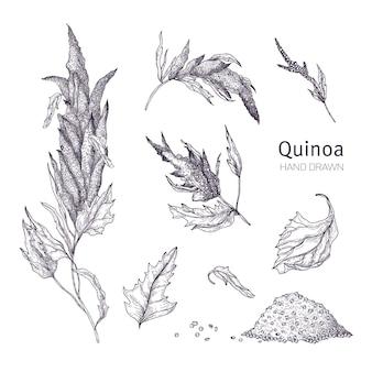 Sammlung von quinoa-blütenpflanzen, blättern und samen handgezeichnet mit schwarzen konturlinien auf weißem hintergrund. satz von zeichnungen von angebauten getreideernten für eine gesunde ernährung. vektor-illustration