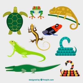 Sammlung von reptilien
