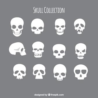 Sammlung von schädeln