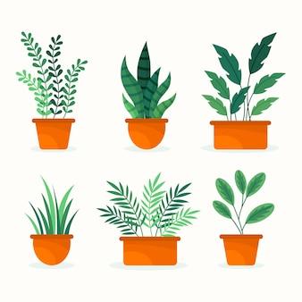 Sammlung von schönen zimmerpflanzen in töpfen