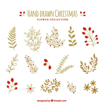 Sammlung von schönen handgezeichneten Pflanzen