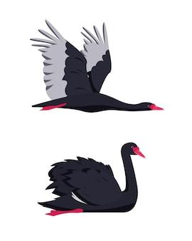 Sammlung von schwimmenden und fliegenden schwarzen schwanenvögeln