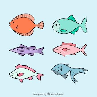 Sammlung von sechs fischen